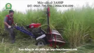Máy cắt cỏ đẩy tay, máy cắt cỏ voi đẩy tay 8HP