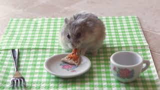 Tiny Hamster Eating a Tiny Pizza