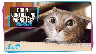 Toxoplasmosis: How Parasites in Your Cat Can Infect Your Brain