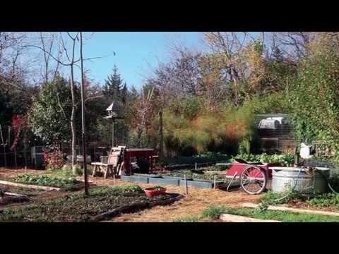 Urban Homesteading - Using Traditional Wisdom for an Urban Vegetable Garden