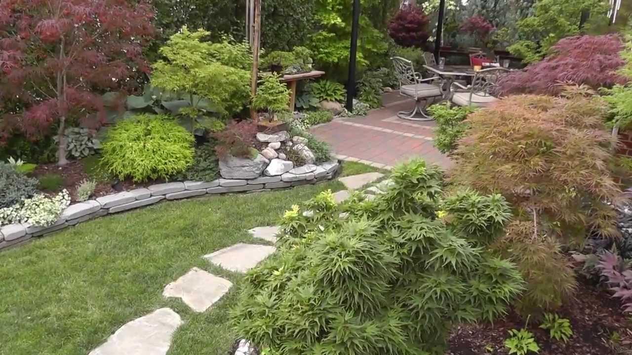 The Summer Garden Japanese Maple Garden Back Yard Tour