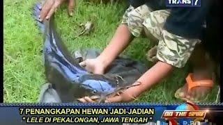 Penangkapan Hewan Jadi-Jadian