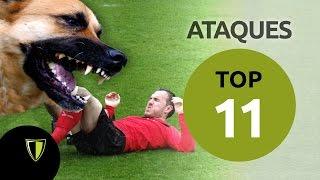 Invasiones animales en campo de fútbol