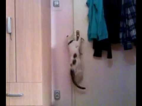 Micika SAMA otvara vrata.