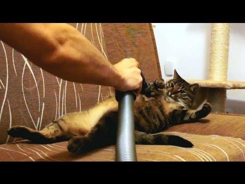 Kot, który pokochał odkurzacz