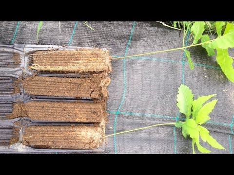 ROOT TRAINERS: WHAT ARE THEY AND WHY ARE THEY AWESOME?