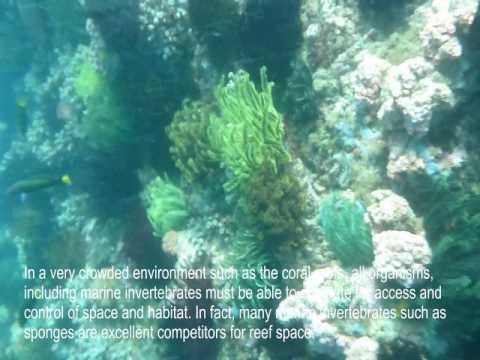 Diversity of Coral Reef Invertebrates