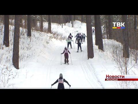 Искитимские школьники приступили к сдаче нормативов ГТО