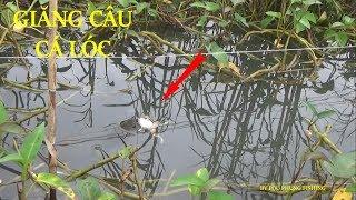 CÂU CÁ LÓC BẰNG CÂU GIĂNG DÍNH CÁ THẤY MÊ - POU PHUNG FISHING