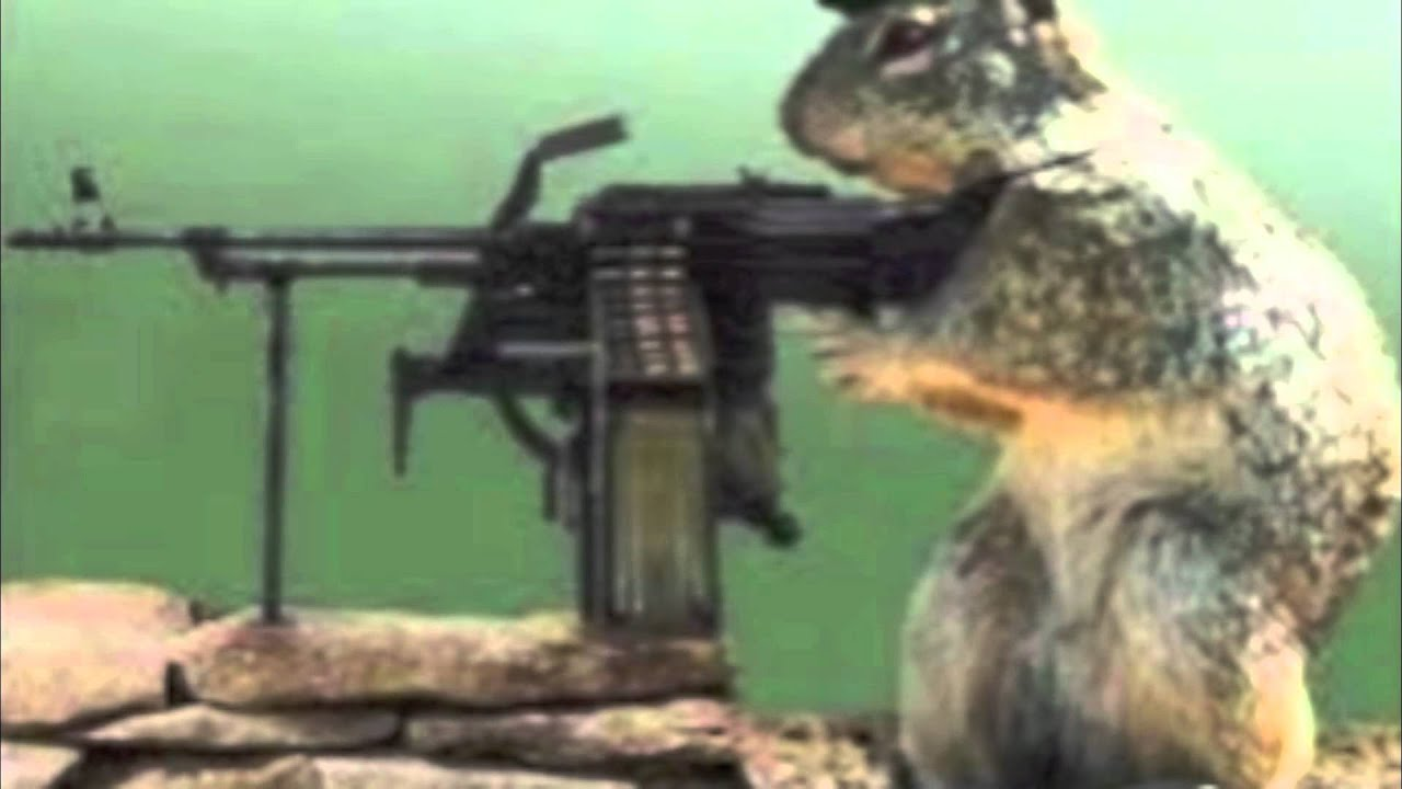 squirrel with a gun - YouTube