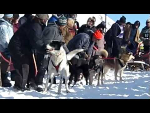 Thumbnail of video Hilarious dog talking at the start of dog sled race  looooooool