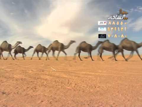 منقية / علي بن طامي بن دهش السبيعي