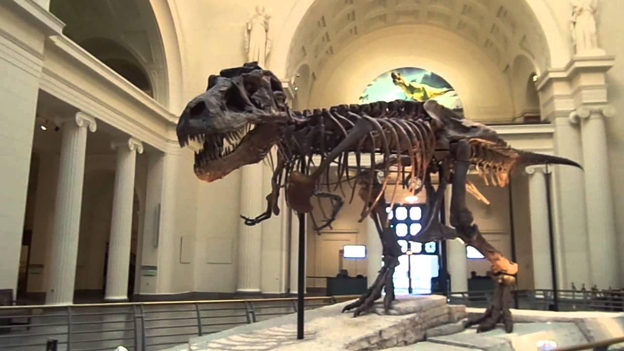 Chicago Field Museum Dinosaur Sue Youtube