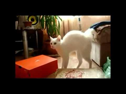 萌貓咪搞笑大集合,你太可愛!