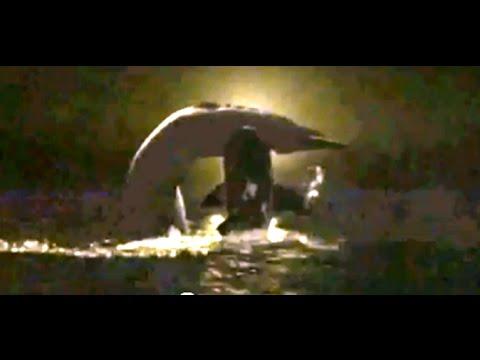 Megalodon -vs- Spermwhale
