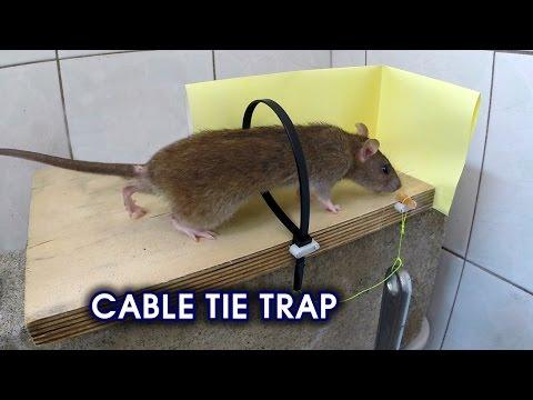 Како да си направите едноставна, но паметна стапица за глувци во домашни услови?