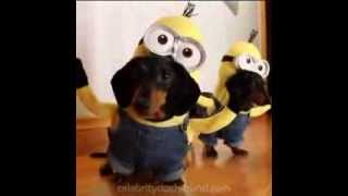 Perros jugando de Minions