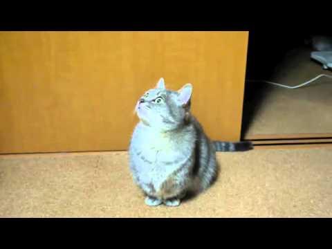 Kucing Imut Minta Makan - Di Jepang.flv