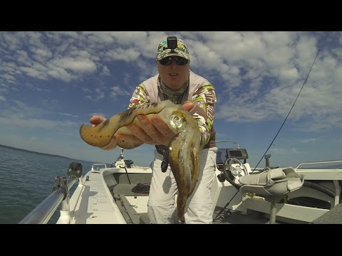 Fish That Snag - VLOG Series - Can I Land Two Squid on One Jig?