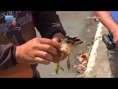 Agentes prisionais resgatam filhote de gavião
