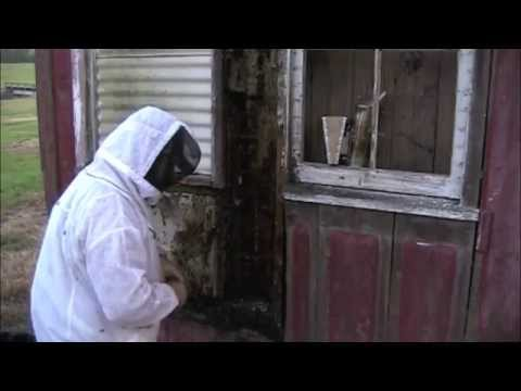 University Of Louisiana At Lafayette Bee Removal