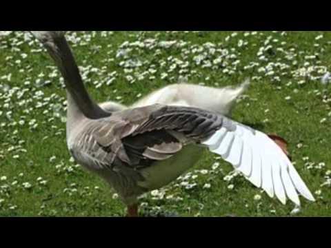 verulamium park St Albans Hertfordshire