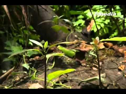 sasyangalile dhyveeka dhrishtandhangal part 3 of 3(Malayalam Islamic Documentary Film)
