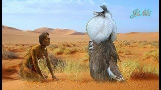 Thổ dân mà gặp loài chim này nhảy múa chắc xin bái làm sư phụ