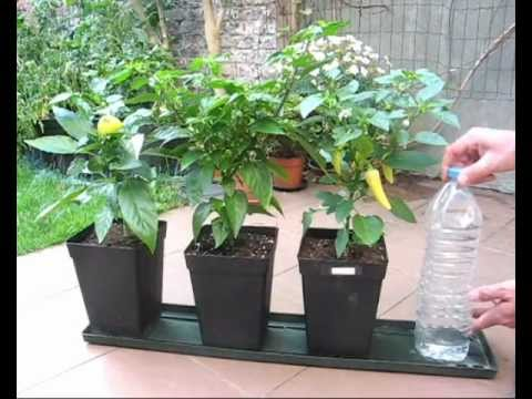 Diy Self Watering System For Pot Plants Part1 Hydroponics