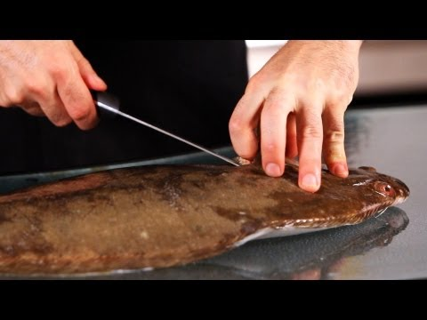 How to Fillet Flounder, Part 1 | How to Fillet Fish