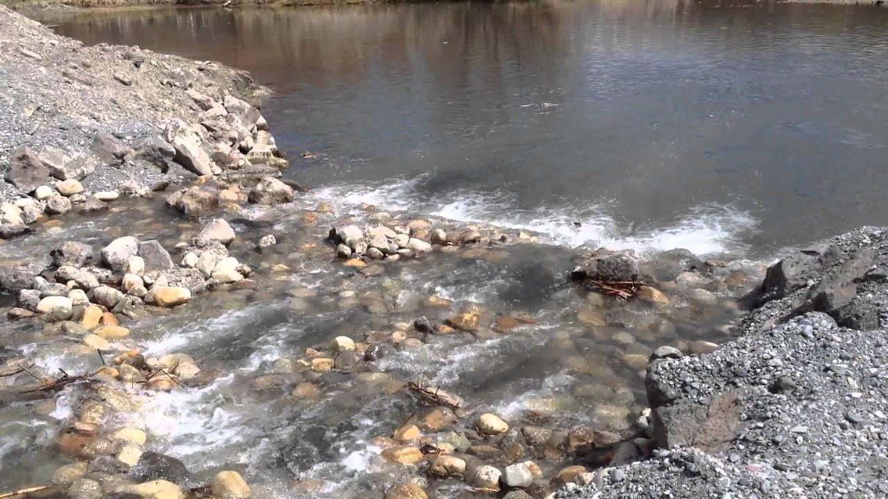 The restoration work at the Kilpatrick Pond is almost complete! Watch as dozens of fish try out the new diversion structure fish ladder.