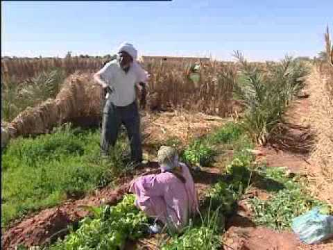 ain salah...participation of women in agriculture.avi