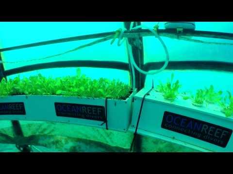 Vídeo A fazenda orgânica que fica no fundo do mar