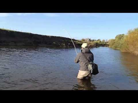 5lb Grilse on fly, River till