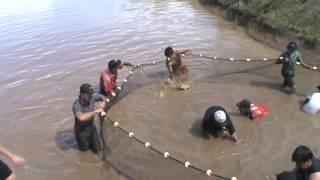 Captura de peces para consumo