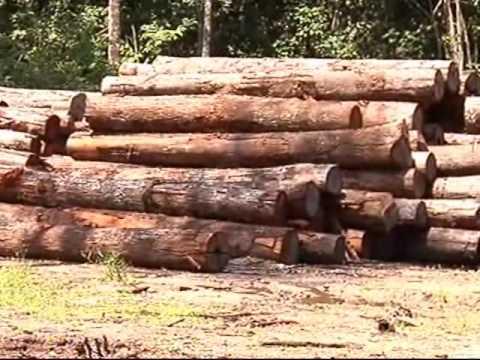 Carlos Minc fecha serrarias clandestinas no Pará