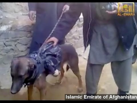 Taliban Video Shows Captured Military Working Dog