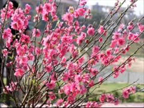 Con bướm xuân - Hồ Quang Hiếu