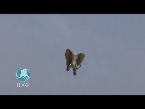 Hustá reklama na ochranu zvířat...:-O