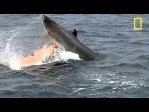 cá voi bơi trong nước