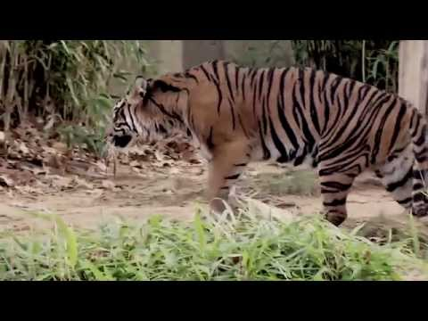 Endangered Song Project: Smithsonian's National Zoo