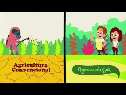 3 Mitos que você sempre ouviu falar sobre agroecologia
