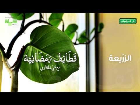 قطائف رمضان: الزريعة