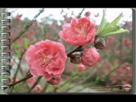 CHÚC MỪNG NĂM MỚI Thơ :Thuy Nga Nina Nguyen Phổ nhạc HẢI ANH