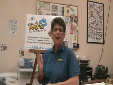 Smelly Dogs: Dog Care Tips from Top Dog Eileen Proctor