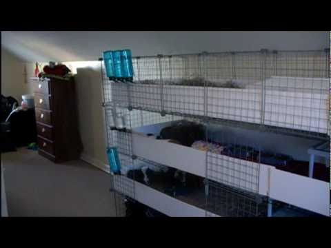 C c cages for 15 pigs youtube for Where to get c c cages