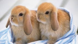 Ultimate A Funny And Cute Bunny Rabbit Videos Compilation 2016 | Laugh TV