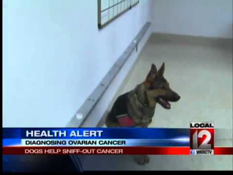 Health Alert: Dogs Help Sniff-Out Cancer