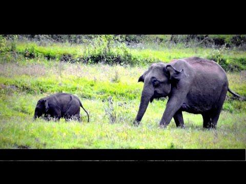 Wayanad - A Short Film on Wayanad Tourism Destinations