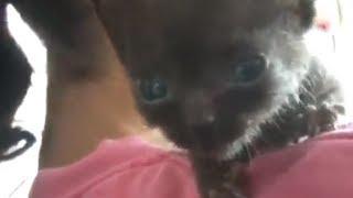 ????????????! More like a Bat than a Cat!